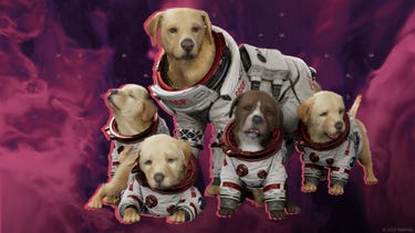 Cosmo, the Russian telepathic spacedog, surrounded by his five puppies