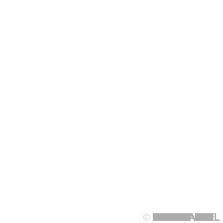 Captain America - Kidding Me - Emote